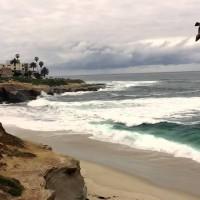 Oceanul Pacific cu lei de mare și pescăruși
